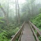 Linn Cove Viaduct Trail